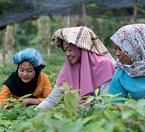 Agroforestry in Indonesia