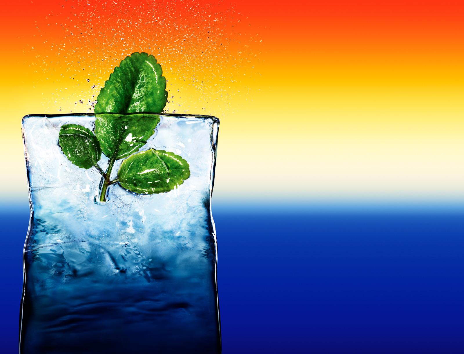 Organic leafof life